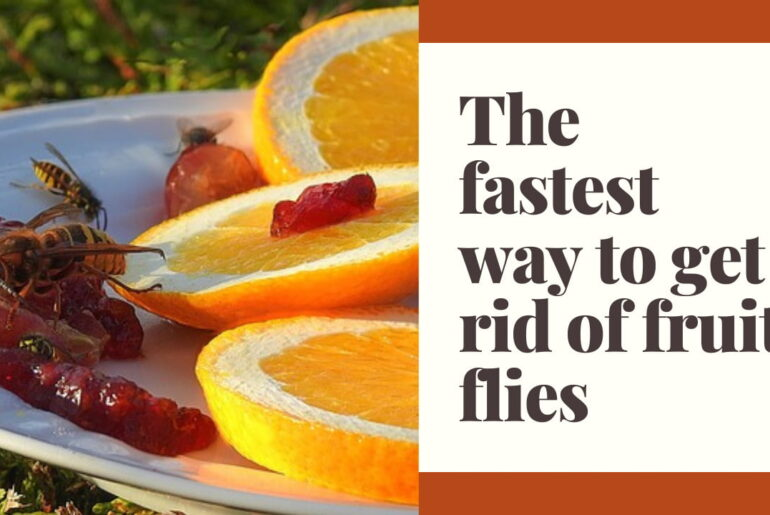 What is the fastest way to get rid of fruit flies