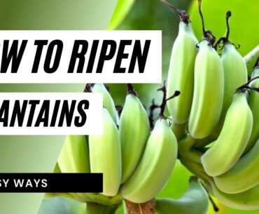 How to ripen plantains