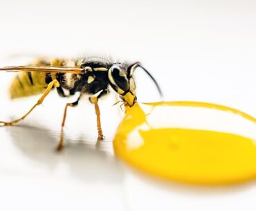 Can a wasp kill you