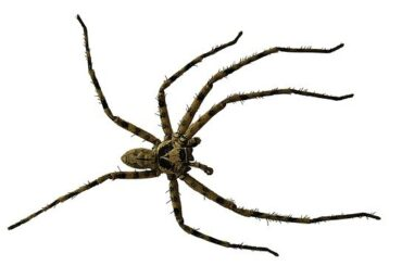 how do spiders get into the house